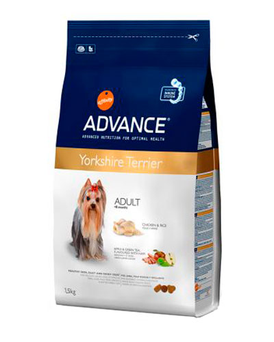 advance-yorkshire-terrier-adult